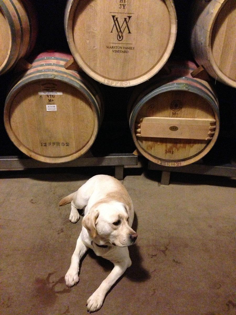 pup with barrels