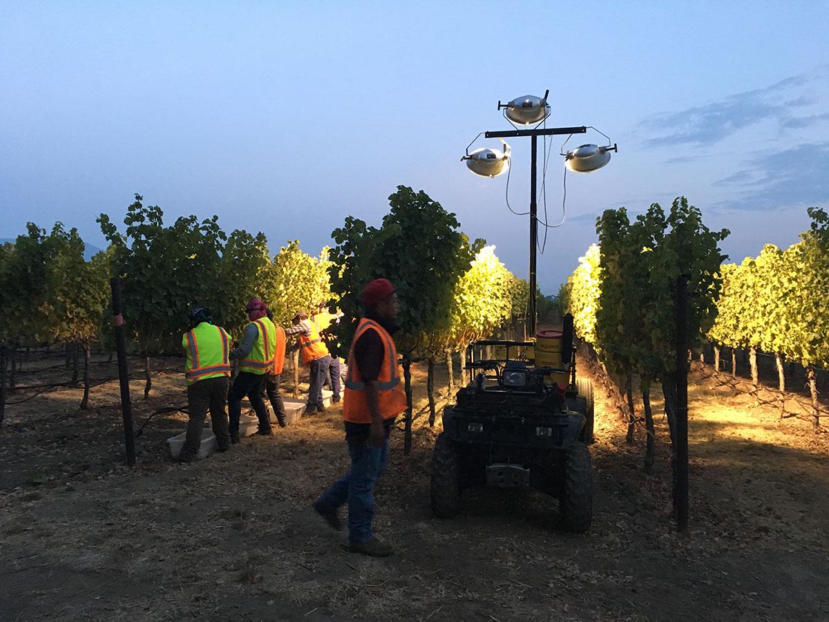 workers in vineyard