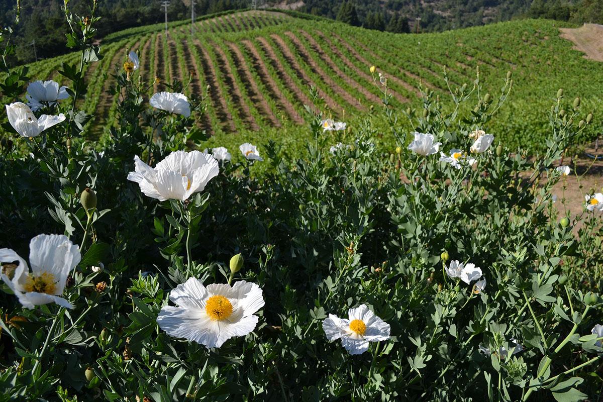 flowers and vineyard